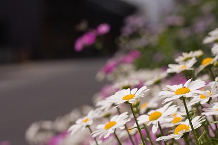 小京都の花