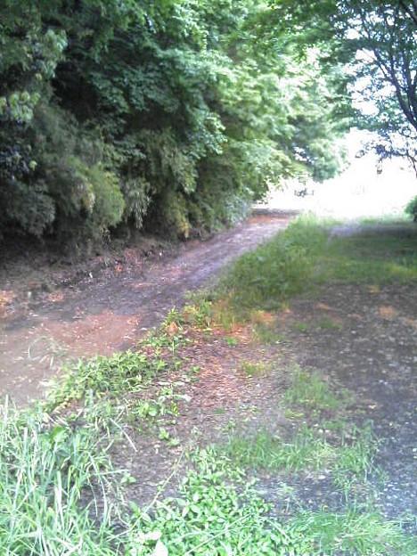 青柳段丘と府中用水