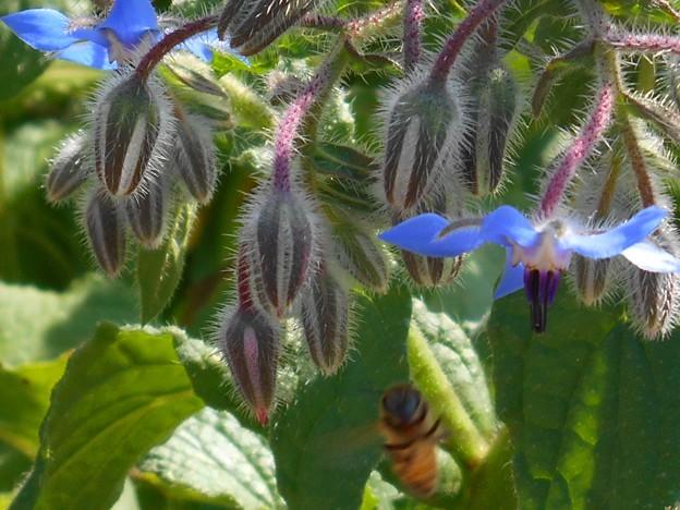 初夏のブルー爽快色の花たち♪