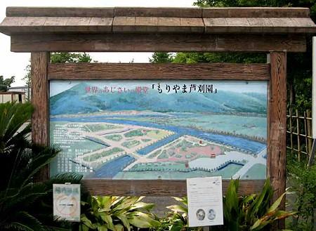 もりやま芦刈園(アジサイ園)-200620-1