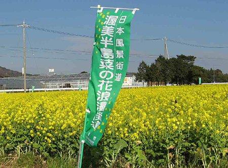 tahara-nanohana-201227-2