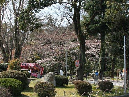 okazakizyou sakuramaturi-210328-6