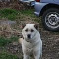 Photos: 犬2