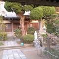 等覚寺境内(4月15日、鎌倉市梶原)