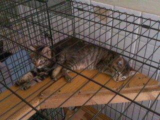 お昼猫(6月2日、動物愛護センター)