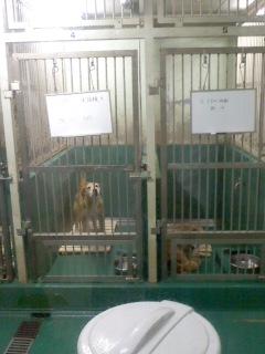 個室(6月2日、動物愛護センター)