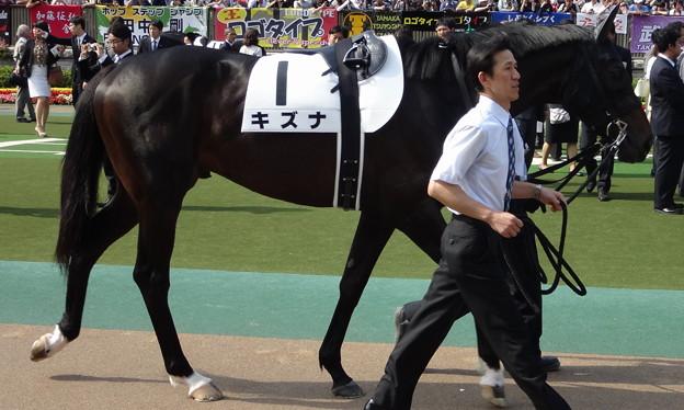 キズナ(2回東京12日 10R 第80回 東京優駿 日本ダービー(GI)出走馬)