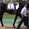 Photos: キズナ(2回東京12日 10R 第80回 東京優駿 日本ダービー(GI)出走馬)