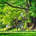 写真: 緑に抱かれて。