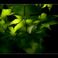 Green of Sunday