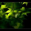 Photos: Green of Sunday