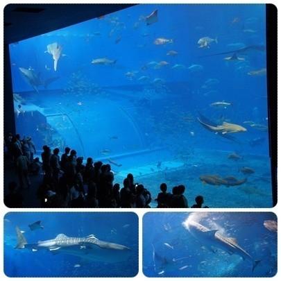 20120603 美ら海水族館2