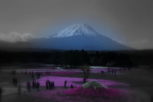 富士山と芝桜(2)