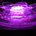 写真: 桜リウム