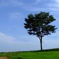 Photos: 丘の上の一本の木