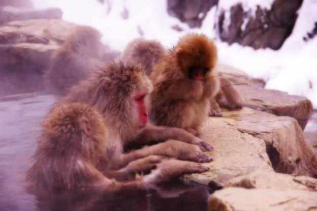 お行儀がいいお猿の家族・・