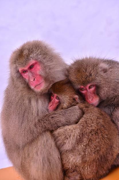 冬の暮らす猿の家族・・・