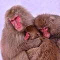 Photos: 冬の暮らす猿の家族・・・
