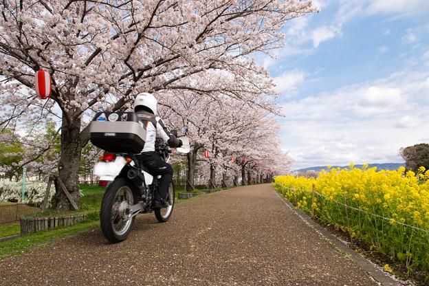 ご近所桜道で自撮り・4