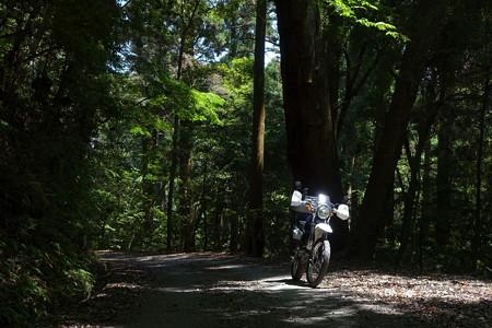 新緑の奈良奥山ドライブウェイ
