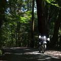 Photos: 新緑の奈良奥山ドライブウェイ
