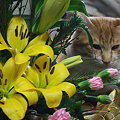 ルビーも開花を楽しみに