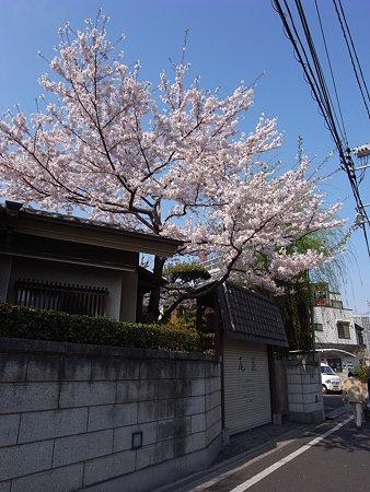 南千住・尾花の桜(2009/4)