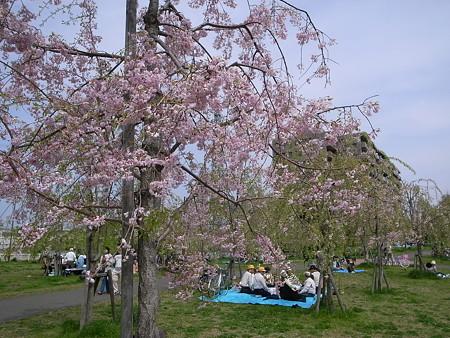 尾久の原公園シダレザクラ祭り(2008/4/12)