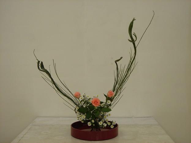 石化シダ、バラ、孔雀草