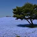 Photos: 青色絨毯