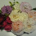 Photos: 090504 バラの見本帳