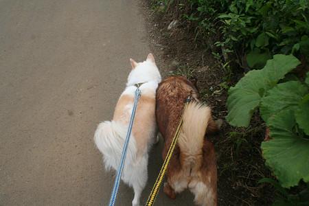 なかよし。ぴったり寄り添ってお散歩で〜す。