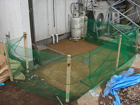 猫よけネットを張って芝養生中の猫害防止