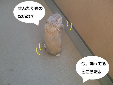 べらんぽ1