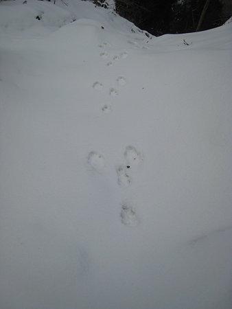 うさぎ(?)の足跡