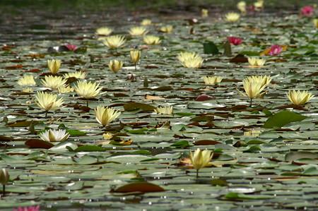 キラキラの池で
