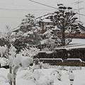 Photos: 雪で何だかいつもと違って見えます