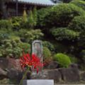 写真: 妙法寺 05