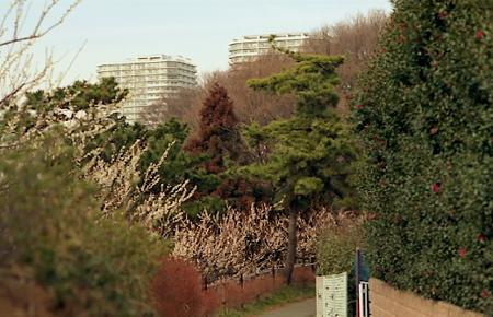 平戸の梅 01