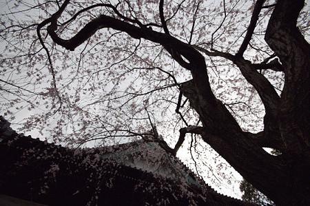 本覚寺 06
