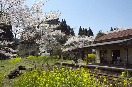 小湊鉄道の桜 06