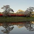 写真: 小湊鉄道の桜 16