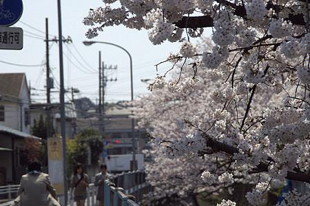 東戸塚の桜 15