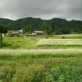 写真: 飛騨高原のソバ畑