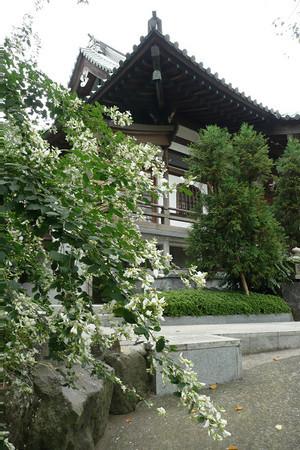 妙法寺の萩