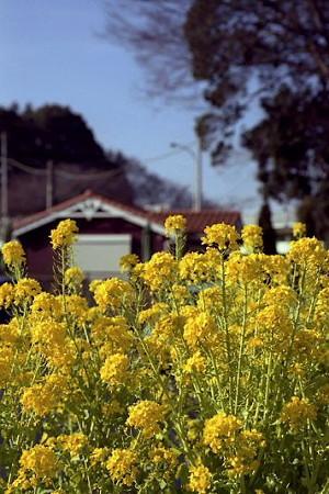 春の肥田牧場 01