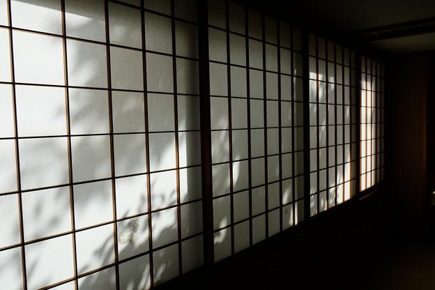 Photos: 障子に差し込む明かり