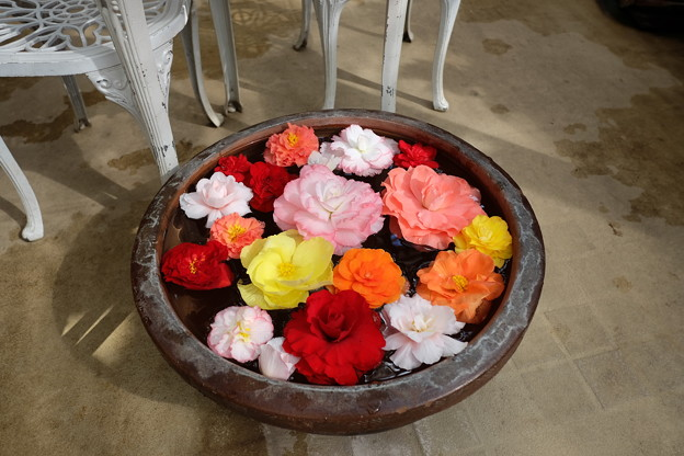 鉢の中のベゴニア