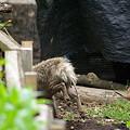 写真: 謎の動物2