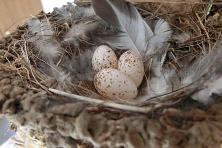 三個目産卵